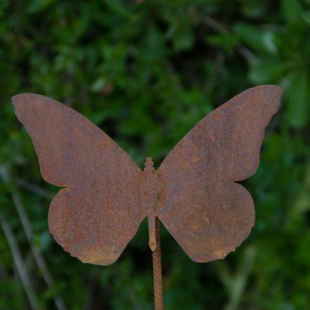 farfalla apollo