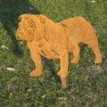 sagoma bulldog
